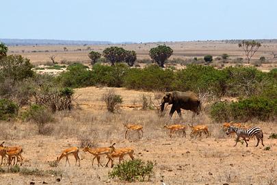 Fotoalbum von Malindi.info - Safari 2 Tage Tsavo East Oktober 2020[ Foto 14 von 84 ]