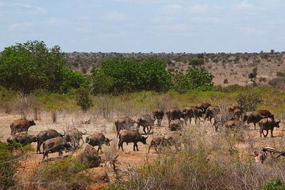 Fotoalbum von Malindi.info - Safari 2 Tage Tsavo East Oktober 2020[ Foto 21 von 84 ]