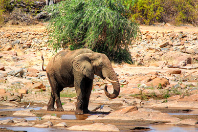 Fotoalbum von Malindi.info - Safari 2 Tage Tsavo East Oktober 2020[ Foto 28 von 84 ]