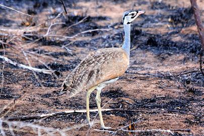 Fotoalbum von Malindi.info - Safari 2 Tage Tsavo East Oktober 2020[ Foto 37 von 84 ]