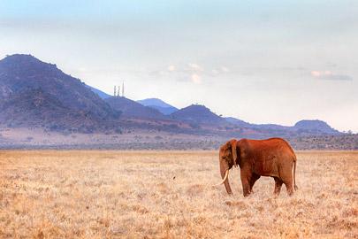 Fotoalbum von Malindi.info - Safari 2 Tage Tsavo East Oktober 2020[ Foto 38 von 84 ]