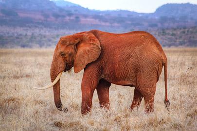 Fotoalbum von Malindi.info - Safari 2 Tage Tsavo East Oktober 2020[ Foto 39 von 84 ]