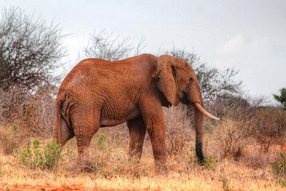 Fotoalbum von Malindi.info - Safari 2 Tage Tsavo East Oktober 2020[ Foto 40 von 84 ]