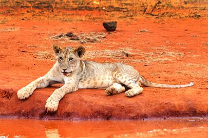 Fotoalbum von Malindi.info - Safari 2 Tage Tsavo East Oktober 2020[ Foto 44 von 84 ]
