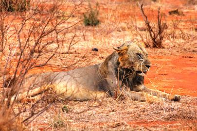 Fotoalbum von Malindi.info - Safari 2 Tage Tsavo East Oktober 2020[ Foto 46 von 84 ]