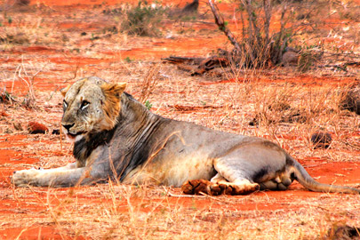 Fotoalbum von Malindi.info - Safari 2 Tage Tsavo East Oktober 2020[ Foto 48 von 84 ]