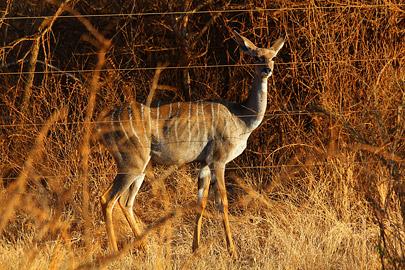 Fotoalbum von Malindi.info - Safari 2 Tage Tsavo East Oktober 2020[ Foto 51 von 84 ]