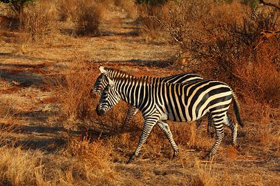 Fotoalbum von Malindi.info - Safari 2 Tage Tsavo East Oktober 2020[ Foto 52 von 84 ]