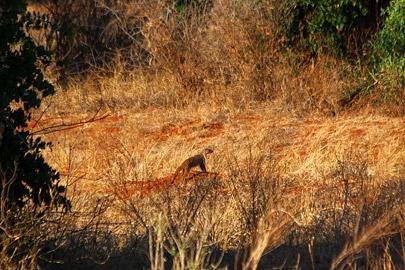 Fotoalbum von Malindi.info - Safari 2 Tage Tsavo East Oktober 2020[ Foto 53 von 84 ]