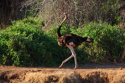 Fotoalbum von Malindi.info - Safari 2 Tage Tsavo East Oktober 2020[ Foto 54 von 84 ]