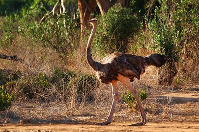 Fotoalbum von Malindi.info - Safari 2 Tage Tsavo East Oktober 2020[ Foto 56 von 84 ]