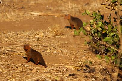 Fotoalbum von Malindi.info - Safari 2 Tage Tsavo East Oktober 2020[ Foto 58 von 84 ]
