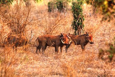 Fotoalbum von Malindi.info - Safari 2 Tage Tsavo East Oktober 2020[ Foto 63 von 84 ]