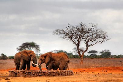 Fotoalbum von Malindi.info - Safari 2 Tage Tsavo East Oktober 2020[ Foto 68 von 84 ]