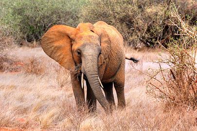Fotoalbum von Malindi.info - Safari 2 Tage Tsavo East Oktober 2020[ Foto 77 von 84 ]