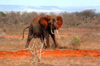 Fotoalbum von Malindi.info - Safari 2 Tage Tsavo East Oktober 2020[ Foto 81 von 84 ]