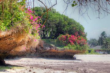 Fotoalbum von Malindi.info - Malindi und Umgebung im Juli und August 2021[ Foto 18 von 79 ]
