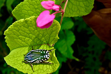 Fotoalbum von Malindi.info - Malindi und Umgebung im Juli und August 2021[ Foto 43 von 79 ]