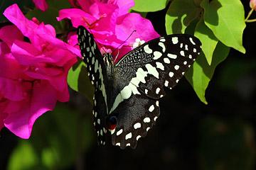 Fotoalbum von Malindi.info - Malindi und Umgebung im Juli und August 2021[ Foto 44 von 79 ]