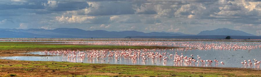 Safari im Aboseli National Park - Panorama vom Lake Amboseli mit vielen Flamingos