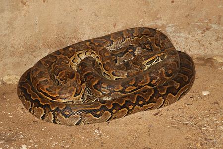 Wer sich für Schlangen interessiert, wird in der Falconry garantiert nicht enttäuscht