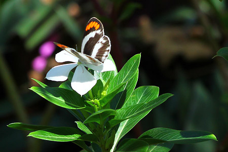 Lmagiro Farm - Faszinierende Natur mit vielen Insekten