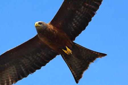 Lmagiro Farm - Faszinierende Natur mit vielen unterschiedlichen Vogelarten
