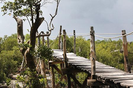 Kurztrip zum Mida Creek Naturschutzgebiet nahe Watamu - Foto 5