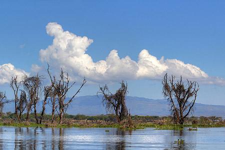Safari zu einigen Seen im Great Rift Valley - Lake Naivasha Foto 2