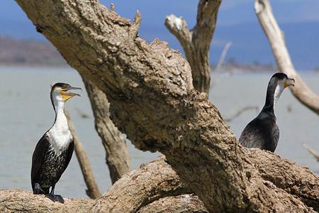 Safari zu einigen Seen im Great Rift Valley - Lake Baringo Foto 4
