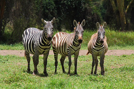 Safari zu einigen Seen im Great Rift Valley - Lake Nakuru Foto 2