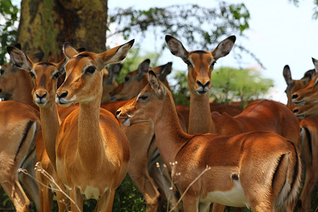 Safari zu einigen Seen im Great Rift Valley - Lake Nakuru Foto 3